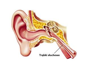 trąbki słuchowe eustachiusza