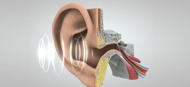 Ośrodek słuchu u człowieka