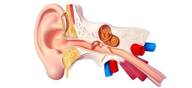 Zapalenie trąbki słuchowej (Eustachiusza)